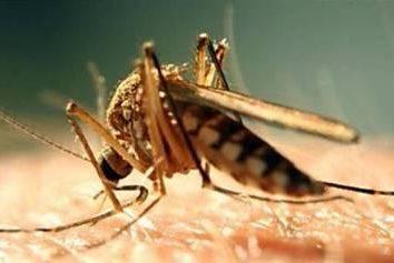 Come sbarazzarsi di spiacevoli conseguenze dopo un morso di zanzara?