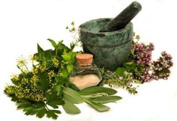 Raw roślinny: gatunek, zbiór, przetwarzanie. zioła