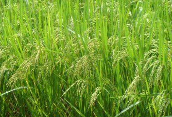 Donde hierbas nativas: en particular el origen y la estructura