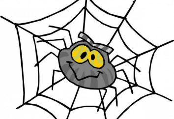 Sen Interpretacja: pająk widziany we śnie – co to jest?