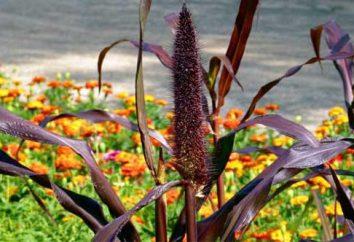 erbe decorative per il giardino: le forme, le foto