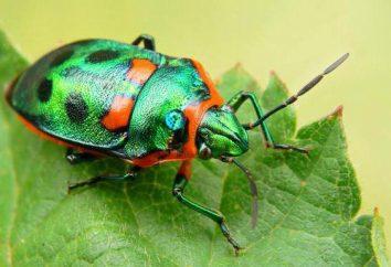 La valeur des insectes d'origine naturelle et humaine vivant (positif et négatif)
