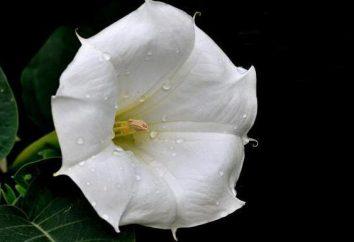 Flower Moon – un charme merveilleux de la nuit