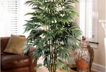 5 mejores plantas de interior que purifican el aire