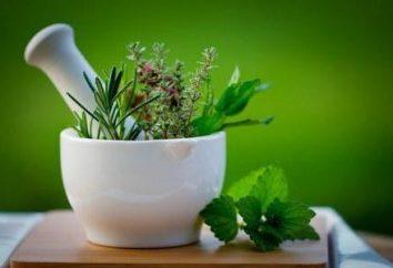 Zastanawiam trawy kobieta. Jakie zioła są przydatne dla zdrowia kobiet