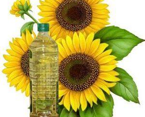 Landwirtschaft: Ölsaaten. Shrovetide russische Kultur
