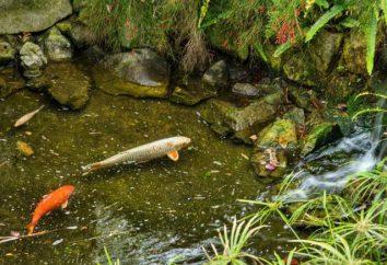Staw rybny: typy, nazwy, zdjęcia