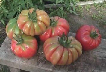 « Panier de champignons » – une tomate pour décorer votre table