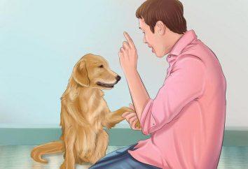 Wie Sie Ihren Hund wütend mit Fremden zu machen. Tipps und Tricks