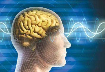 actividade intelectual. Os direitos de resultados da atividade intelectual