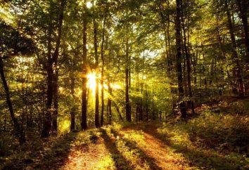 Jak nie zgubić się w lesie? Co zrobić, jeśli się zgubisz