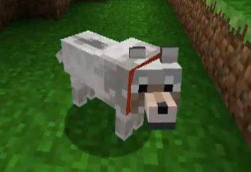 """Come addestrare il vostro cane in un """"Maynkraft"""", e che ha bisogno di"""