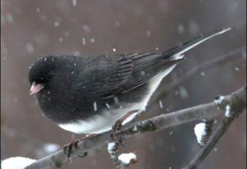 Quoi et comment aider les oiseaux en hiver