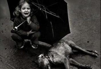gli animali senza casa – è la responsabilità della persona