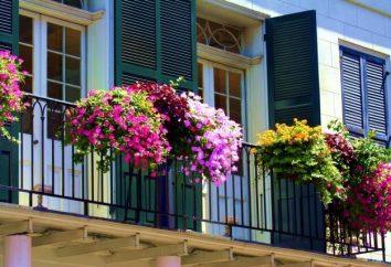 Fiore ampelnye – nome e la foto. Ampelnye fiori per balcone