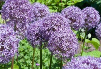 Kwiaty z kwiatami liliowymi. Piękne kwiaty liliowe – tytuły, zdjęcia i zalecenia dotyczące opieki