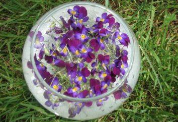 Les propriétés médicinales des fleurs lilas: applications en médecine et contre-indications.