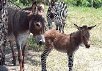especies artificial de animales: ejemplos