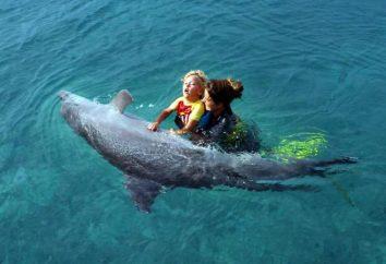 terapia con delfines en Anapa – tratamiento de niños y adultos