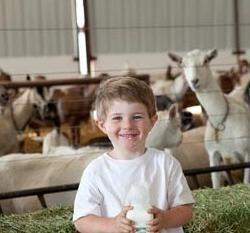 propriétés nocives et bénéfiques du lait de chèvre pour les enfants