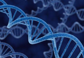 Czym jest dziedziczenie? Genetyka i jej rodzaje