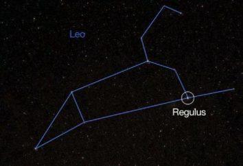 Che cosa è Regulus? Caratteristiche e una stella