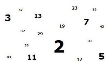 Che cosa è un numero intero positivo? Storia, la portata, le caratteristiche