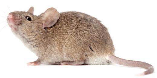 souris dans la maison best maison forestiere hamster souris with souris dans la maison cool. Black Bedroom Furniture Sets. Home Design Ideas