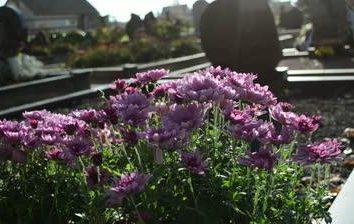 Jaki rodzaj kwiatów posadzić na cmentarzu ozdobić grób