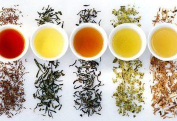 classificação de chá por diferentes parâmetros. Tipos, características e bule