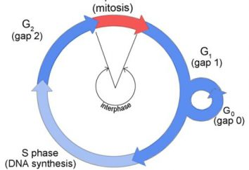 Główne procesy życia komórek