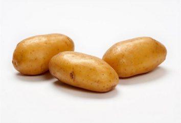 Kartoffeln Lady Claire: Klasse Beschreibung, Fotos, Bewertungen. Wenn Kartoffeln zu pflanzen? Die Reihenfolge der Arbeiten in den Kartoffelanbau
