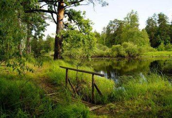Où passer des vacances inoubliables dans la région de Riazan