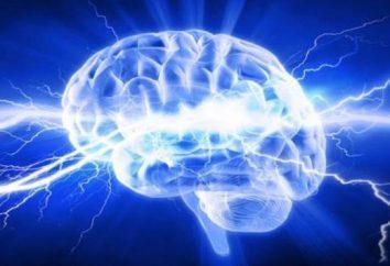 Synapses électriques et leurs caractéristiques