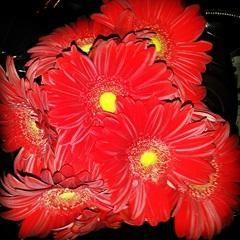 Atrakcyjny bukiet róż?