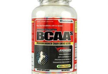 Die Wirkung von BCAAs auf den Körper und seine Wirkung