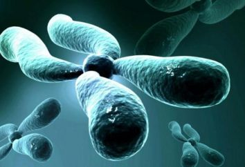 Morgan Chromosomentheorie: Definition, Grundlagen und Funktionen