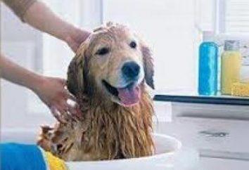 Comment laver un chien droit?