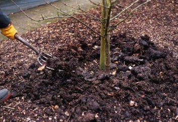 Leczenie drzew jesienią. Opryskiwanie drzew jesienią