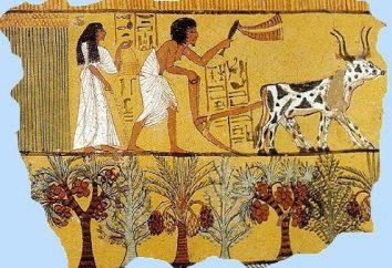 Los antiguos agricultores en Egipto. El antiguo Egipto: Agricultura