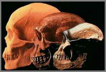 Preuve de l'évolution. Embryologie, cytologique, témoignage biogéographique: exemples