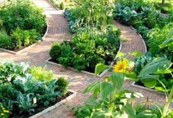 Como escolher uma beira para sua horta?