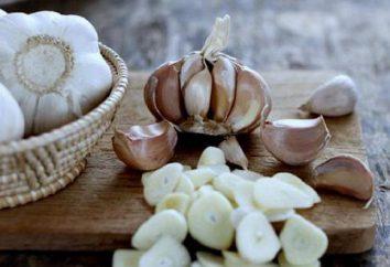 elaborazione aglio prima della semina. Caratteristiche di coltivazione di aglio