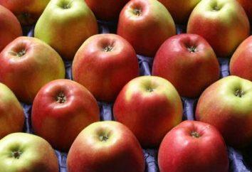 Queima de gordura dietas: as opções e princípios de acção