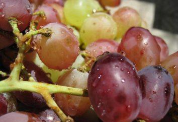 Julian – pyszne winogrona odmiany hybrydowej