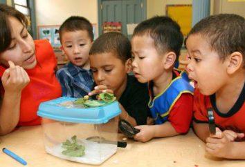 Profesjonalnej jakości nauczyciel przedszkola. Jaki powinien być nauczyciel przedszkola