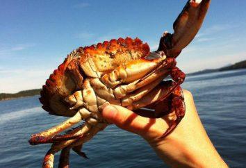Attraper des crabes. Où, quoi et comment attraper des crabes