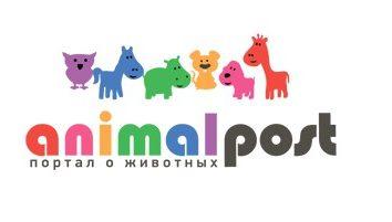 Un portail animaux Animalpost.ru intéressants et insolites. Inscrivez-vous maintenant!