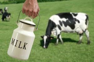 Quand une vache peut-elle donner du lait? Opinions des experts et opinions des parents