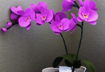 Kwiaty z jego własnymi rękami: Orchid papieru falistego